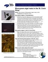 Blue-Green Algal Mats in the St. Croix River